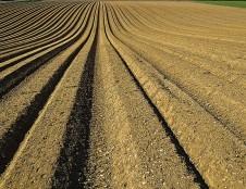 Italai ieško biodujų ir trąšų gamintojų