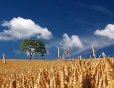 Nacionalinė klimato darbotvarkė nubrėžia, kaip išsivaduoti iš naftos ir apsisaugoti nuo nelaimių